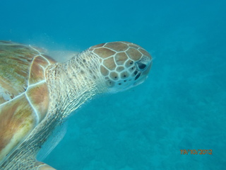 Turtle in Carlisle Bay